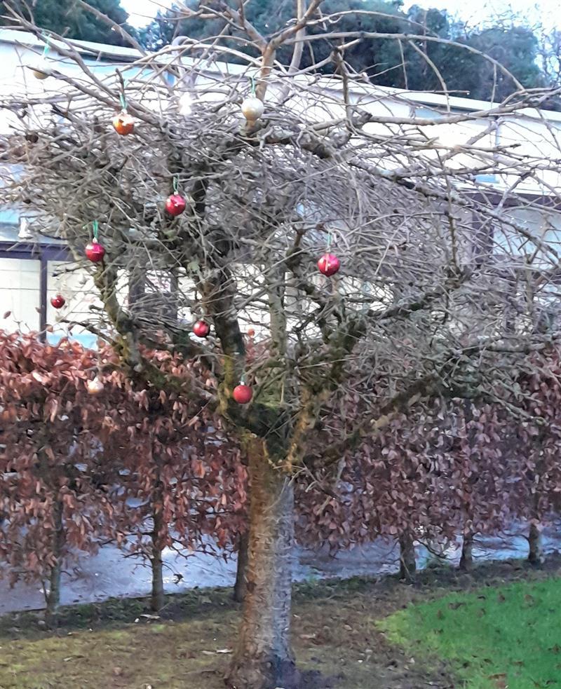 Christmas Pic 4.jpg